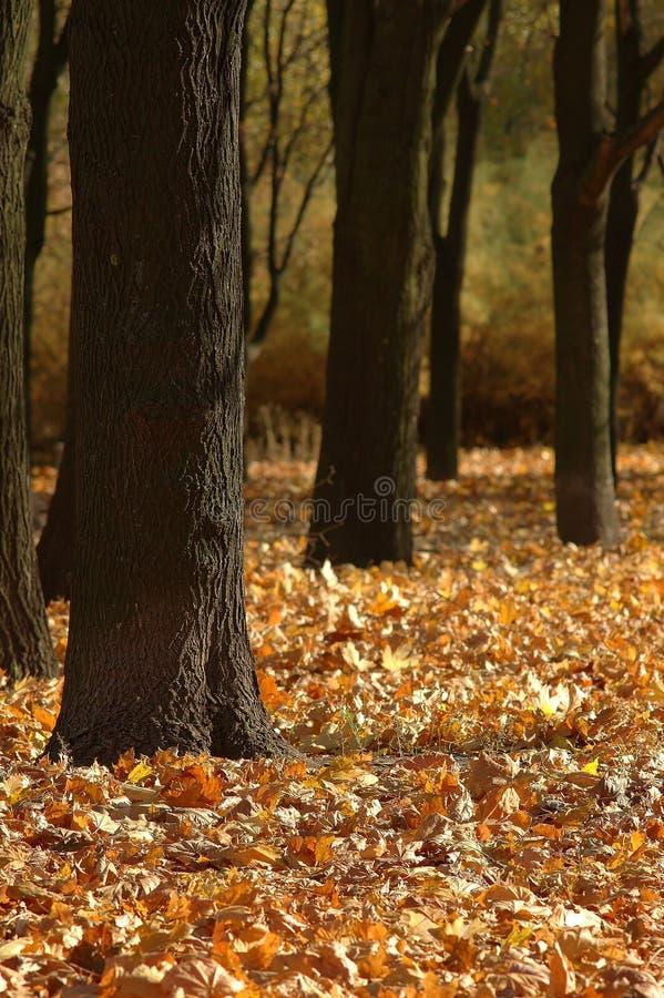 życie ciągle jesieni zdjęcia royalty free
