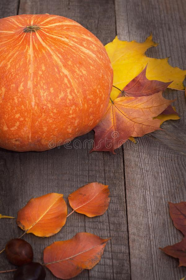 życie ciągle jesieni Bania i suszy liście na drewnianej desce odgórny widok, rocznika styl zdjęcia royalty free