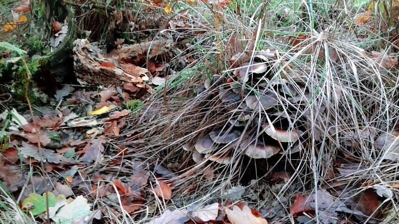 życie ciągle jesieni Pieczarki na fiszorku liście upaść Kolorów żółtych liście i zielona trawa zdjęcia royalty free