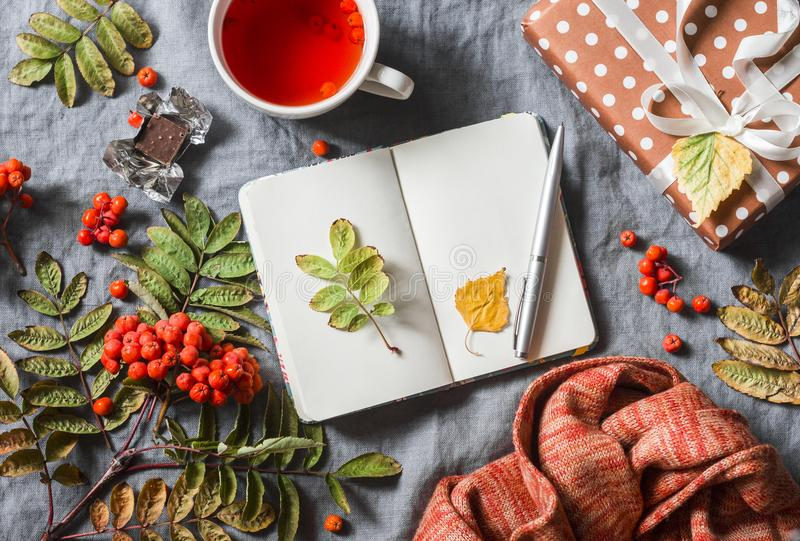 życie ciągle jesieni Pusty notepad, herbata, ashbery, domowej roboty prezent na szarym tle, odgórny widok Uwalnia przestrzeń dla  obrazy stock