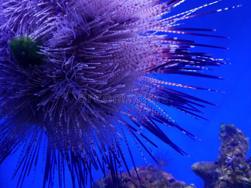 Życie morskie na Hawajach zdjęcia stock