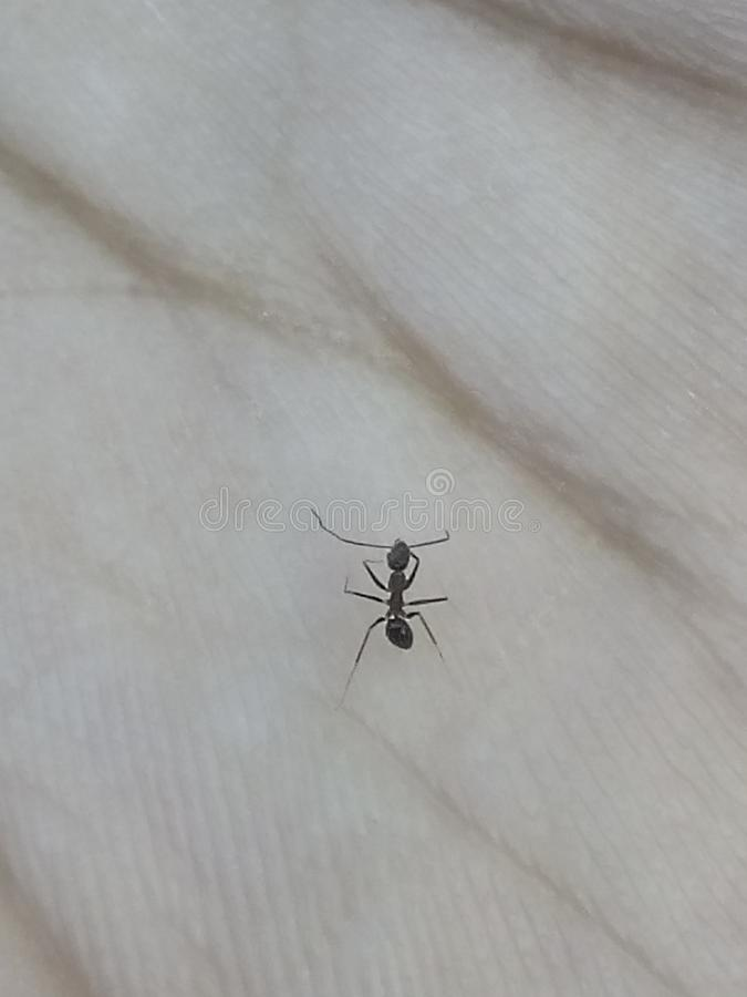 Życie mrówka fotografia stock