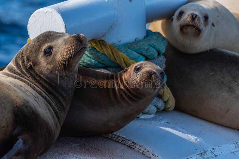 Życie na morzu z ludzkich produktów morskich zdjęcia stock