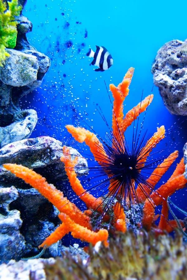 życie podwodny fotografia stock