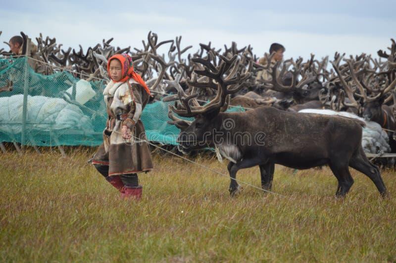 Życie reniferowi poganiacze bydła na Yamal półwysepie fotografia royalty free
