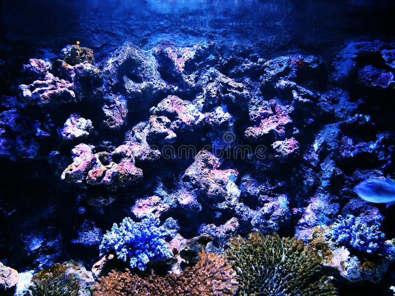 Życie w oceanie jest w ten sposób różnorodny fotografia stock