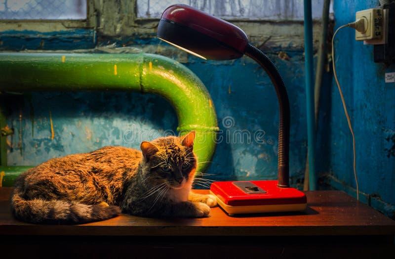 1 życie wciąż Lampa i kot obraz royalty free