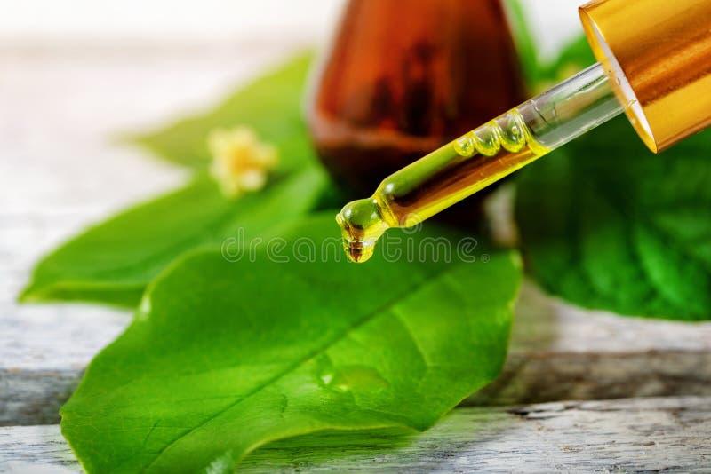 Życiorys ziołowi kosmetyki i alternatywnej medycyny pojęcie zdjęcia stock