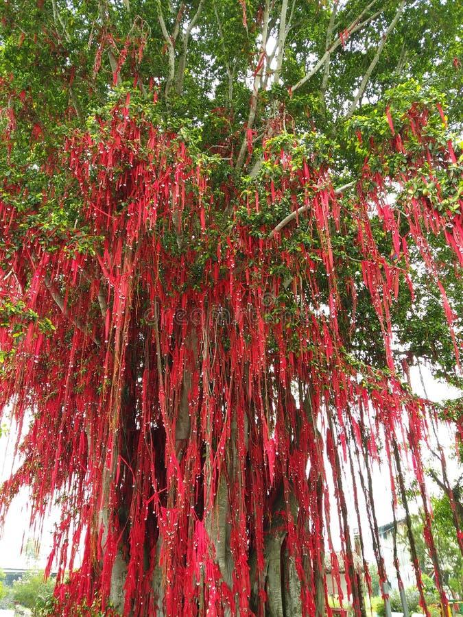 Życzenia drzewo W Malezja obraz royalty free