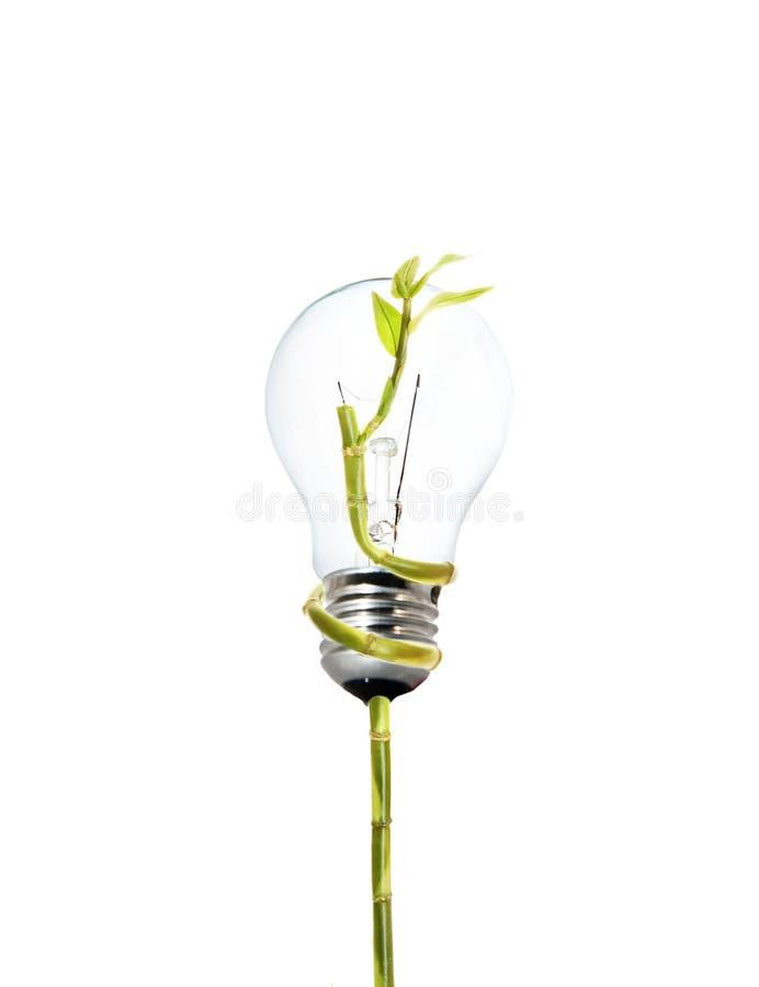 życzliwy żarówki środowisko zdjęcie stock