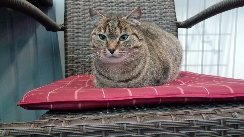 Życzliwy kot zdjęcie stock