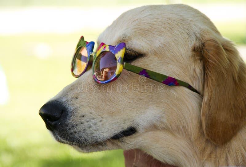 Życzliwy Pies obraz stock
