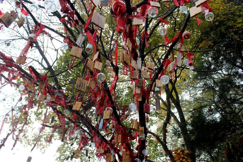 życzyć drzewny fotografia royalty free