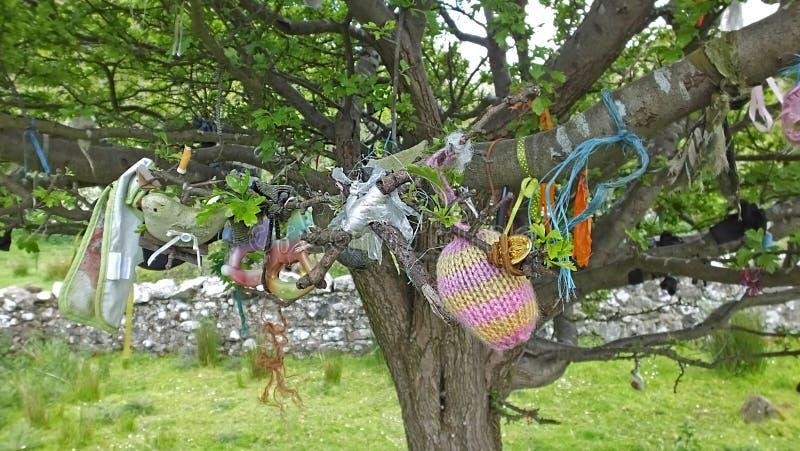 życzyć drzewny zdjęcie stock