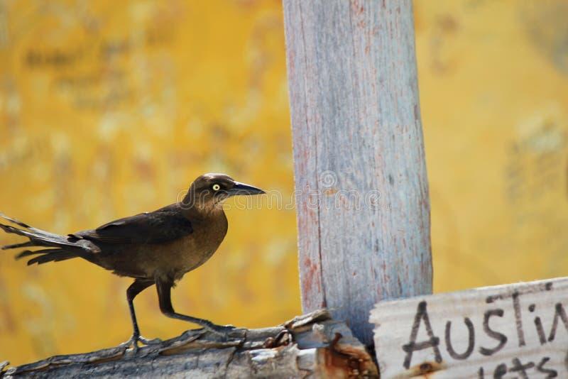 Å»yjÄ…c jak miejscowy ptak na Bahamach zdjęcie stock