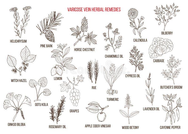 Żylakowatej żyły ziołowi remedia royalty ilustracja