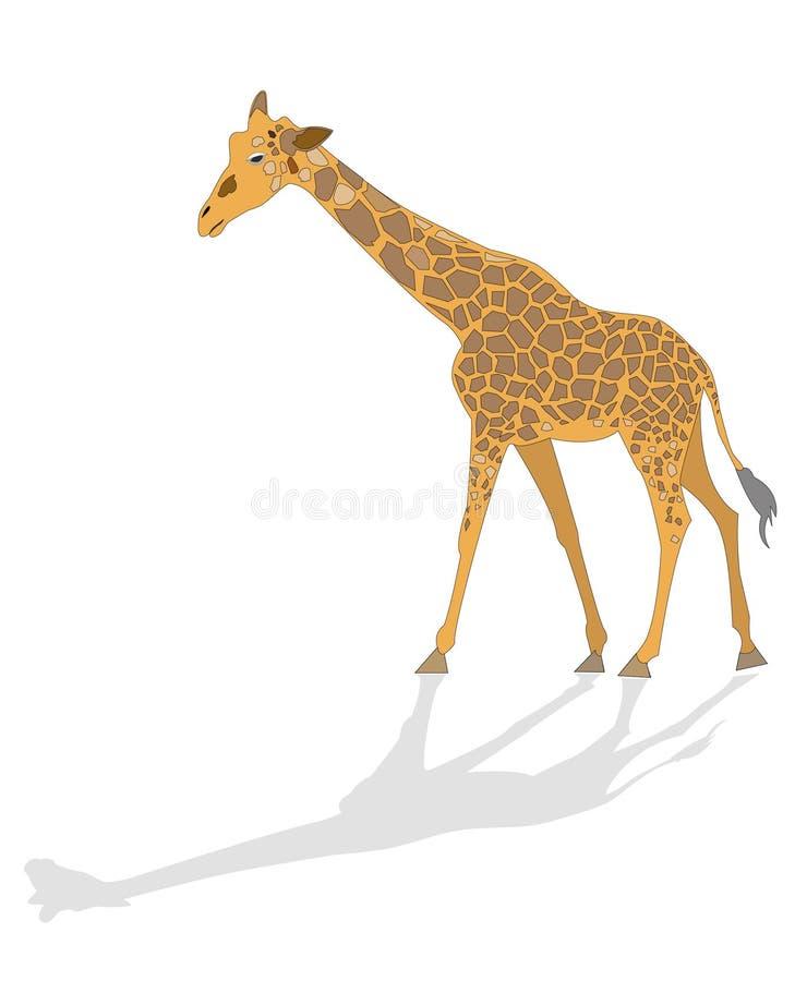 żyrafa ilustrująca