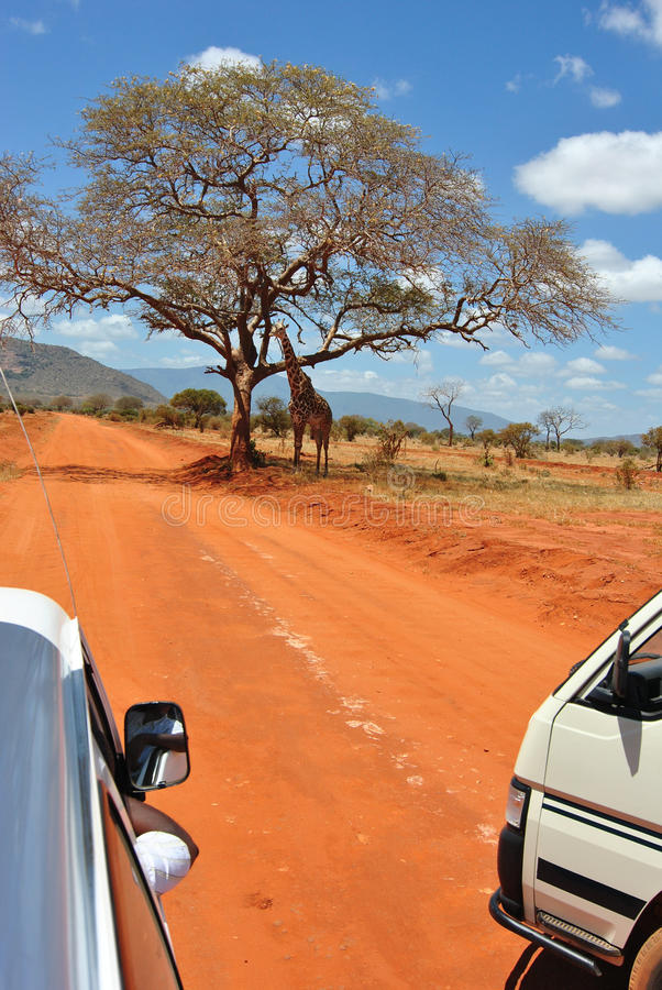 żyrafa safari obraz stock