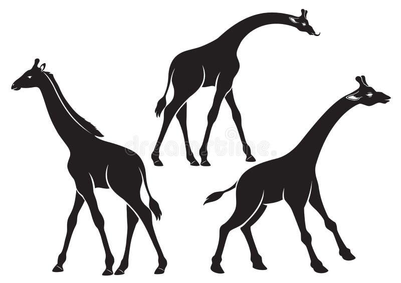 żyrafy royalty ilustracja