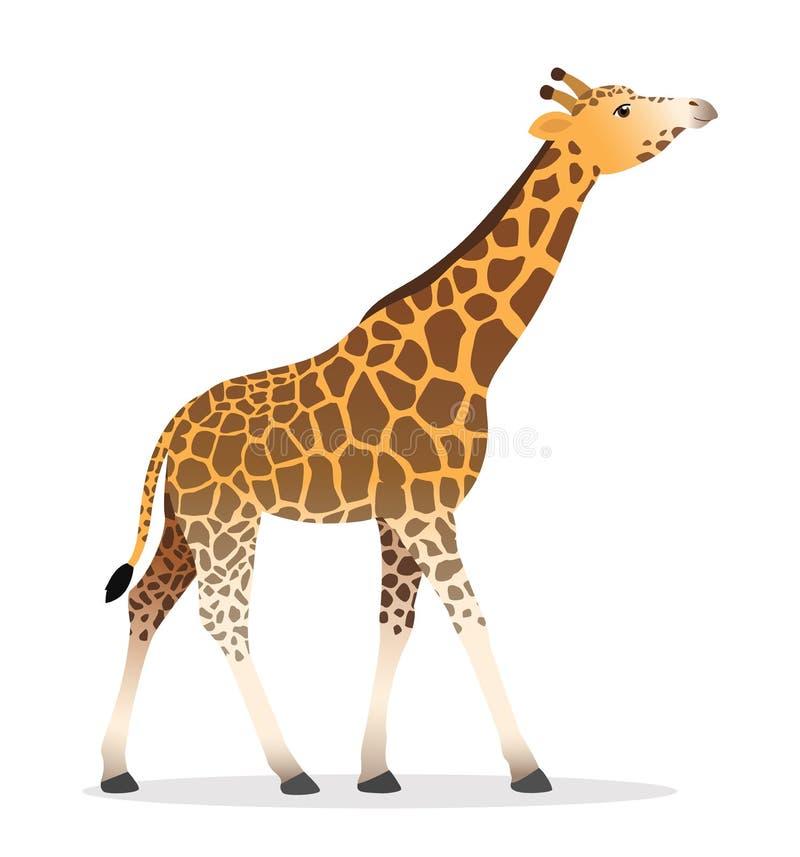 Żyrafy chodzącej płaskiej afrykańskiej zwierzęcej przyrody wektorowa ilustracyjna ikona odizolowywająca na bielu royalty ilustracja