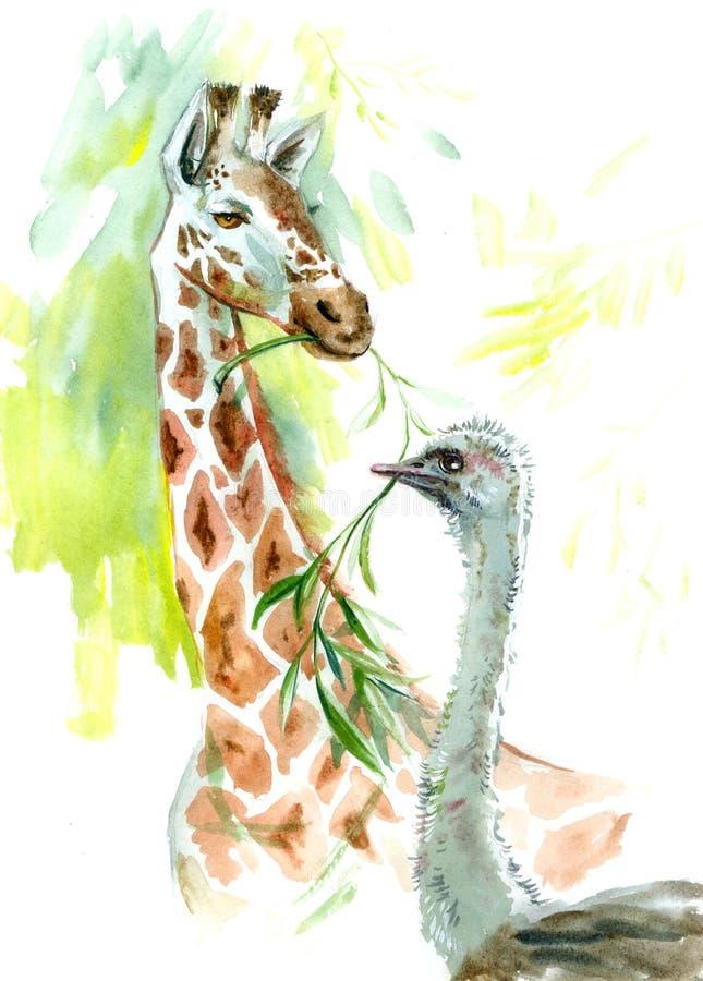 Żyrafy i strusia akwareli zwierzęta royalty ilustracja