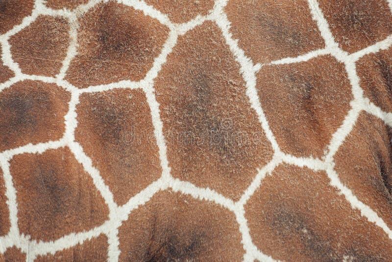 Żyrafy skóry wzór, kształt, tekstura zdjęcie stock