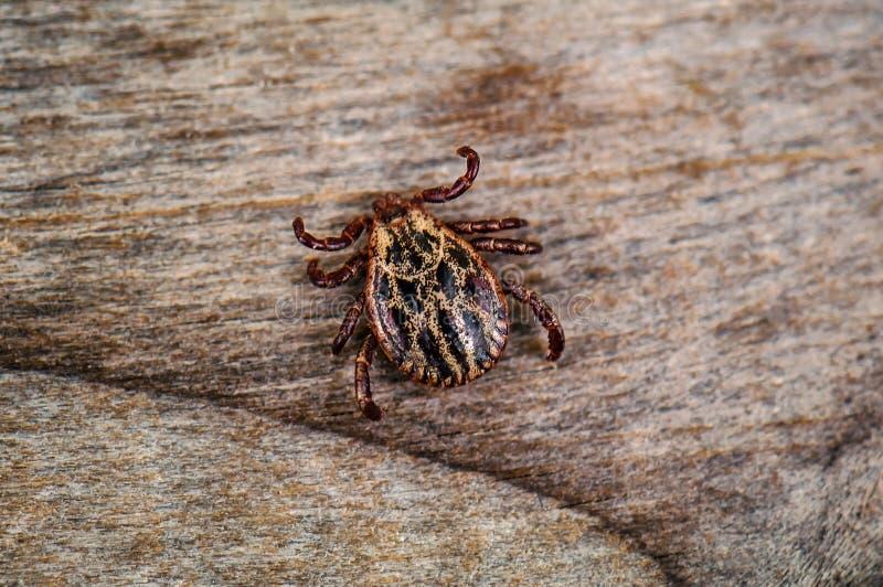 Żywa lądzieniec na drewnianym tle obraz stock
