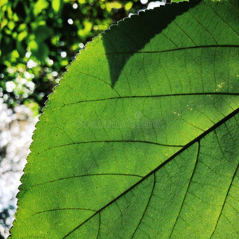 Żywej zieleni życie w lecie fotografia stock