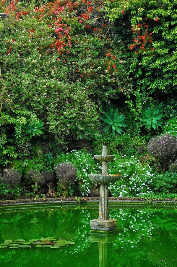 Żywej zieleni tropikalni ogródy z wody cechą zdjęcie stock