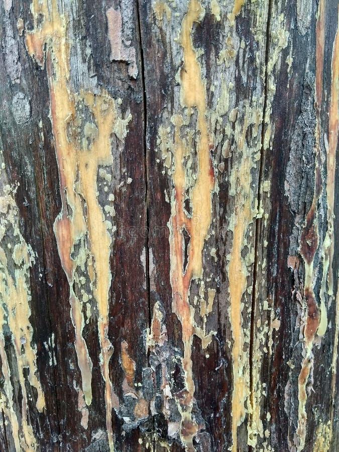 żywica filar stara drewniana tekstura obraz stock