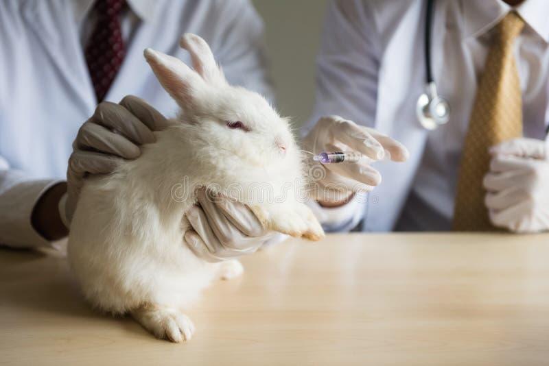 żywieniowa medycyna chory biały uroczy królik zdjęcia royalty free