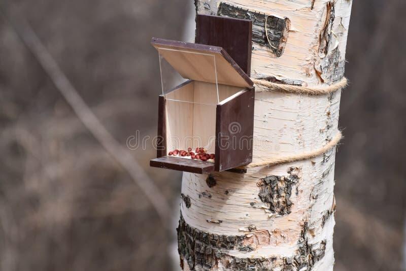 Żywieniowej synkliny dozownik, żłób dla ptaków i zwierzęta na drzewie w lesie, zdjęcie stock