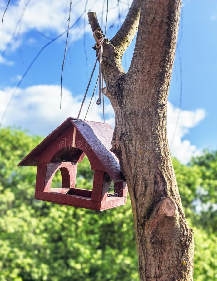 żywnościowa synklina ptak obraz royalty free