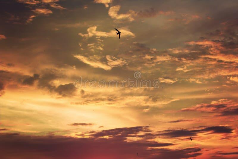 Żywy dramatyczny mroczny zmierzchu niebo zdjęcia stock