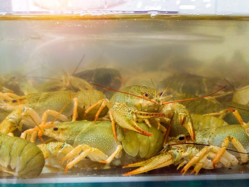 Żywy rakowy w akwarium Raki w wodzie zdjęcia royalty free