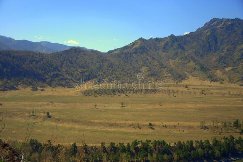 Żyzna dolina otaczająca malowniczymi górami Altai, Syberia, Rosja Krajobraz obrazy royalty free