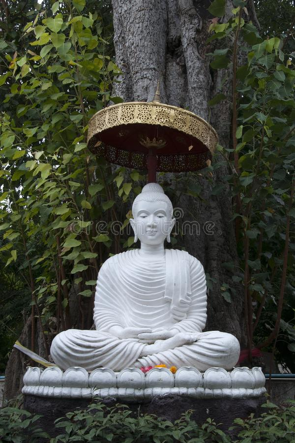Άγαλμα του Βούδα κάτω από το δέντρο στο mahathera Wat umong chan στοκ φωτογραφία με δικαίωμα ελεύθερης χρήσης