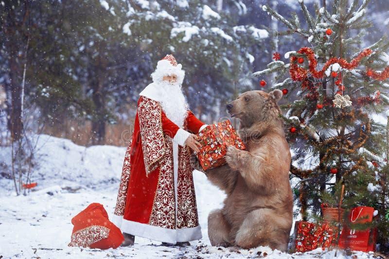 Άγιος Βασίλης δίνει το χριστουγεννιάτικο δώρο στην καφετιά αρκούδα στοκ φωτογραφίες