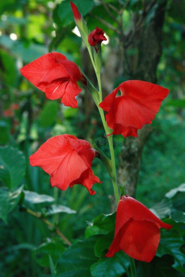 άγνωστες άγρια περιοχές λουλουδιών στοκ εικόνες