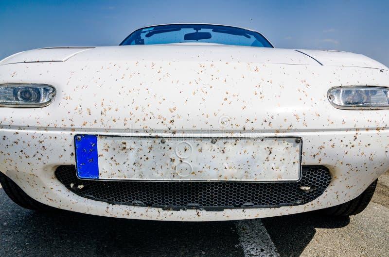 Άγνωστη εθνική οδός, Ουγγαρία - 1 Μαΐου 2017 Νεκρά έντομα οδηγώντας στα γρήγορα αυτοκίνητα στοκ εικόνες