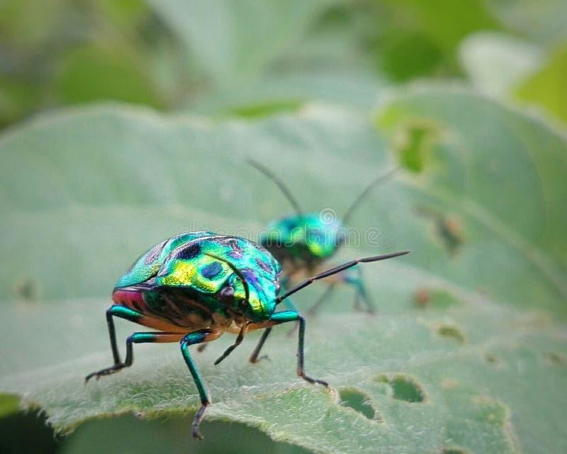 Άγνωστο έντομο στοκ εικόνα με δικαίωμα ελεύθερης χρήσης