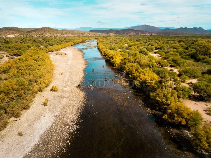 άγρια άλογα στον ποταμό στοκ φωτογραφίες