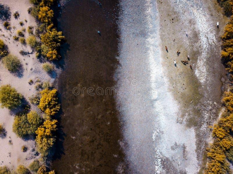 άγρια άλογα στον ποταμό στοκ εικόνα