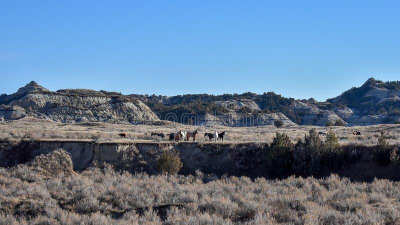 Άγρια άλογα graxe από απόσταση στοκ φωτογραφία με δικαίωμα ελεύθερης χρήσης