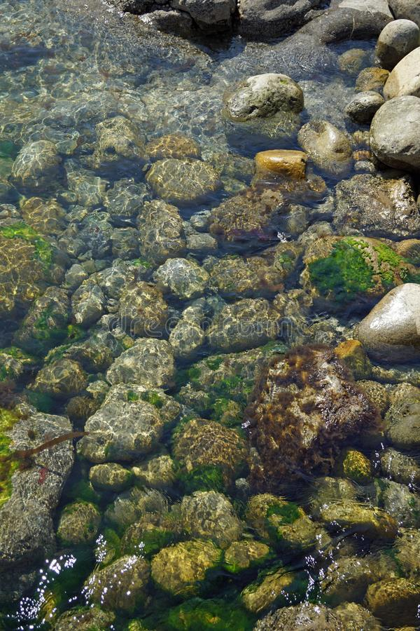 Άγρια ατλαντική υποβρύχια ζωή τρόπων στην ακτή στο σημείο του ST Johns στοκ εικόνα