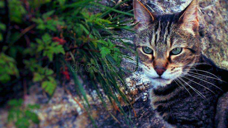 Άγρια γάτα σπιτιών έξω στις άγρια περιοχές του στοκ εικόνες