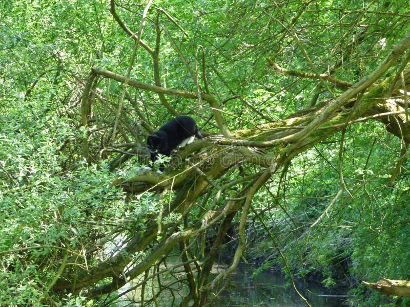 Άγρια γάτα στο δέντρο πέρα από το ρεύμα στοκ φωτογραφία με δικαίωμα ελεύθερης χρήσης