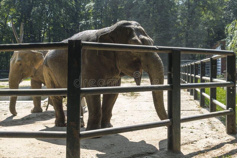Άγρια ζώα στο ζωολογικό κήπο στοκ φωτογραφία με δικαίωμα ελεύθερης χρήσης