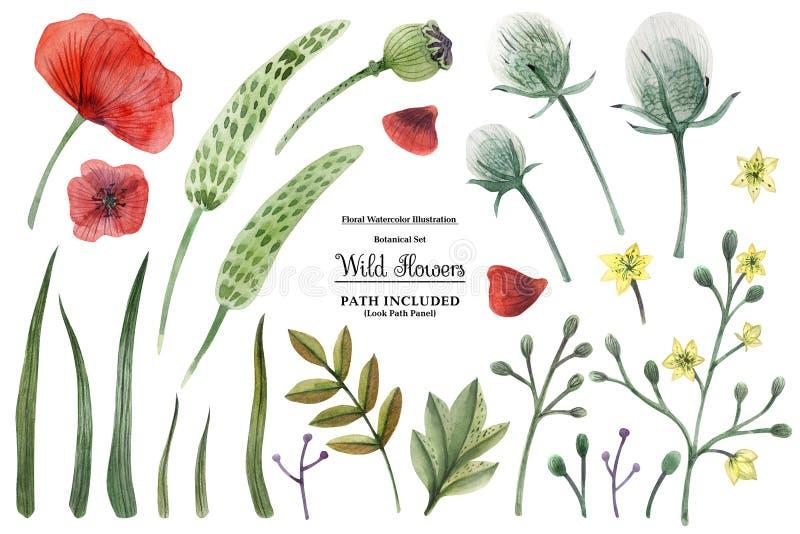 Άγρια λουλούδια απεικόνισης Watercolor διανυσματική απεικόνιση