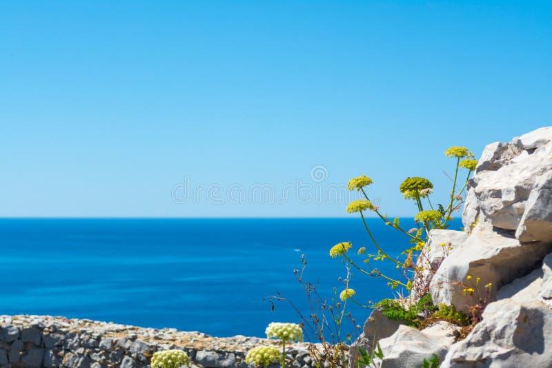 Άγρια λουλούδια στην ακτή Capo Caccia, στη Σαρδηνία στοκ εικόνες